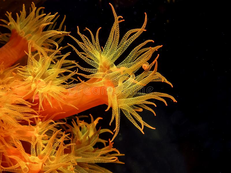 карибский коралловый риф стоковое фото