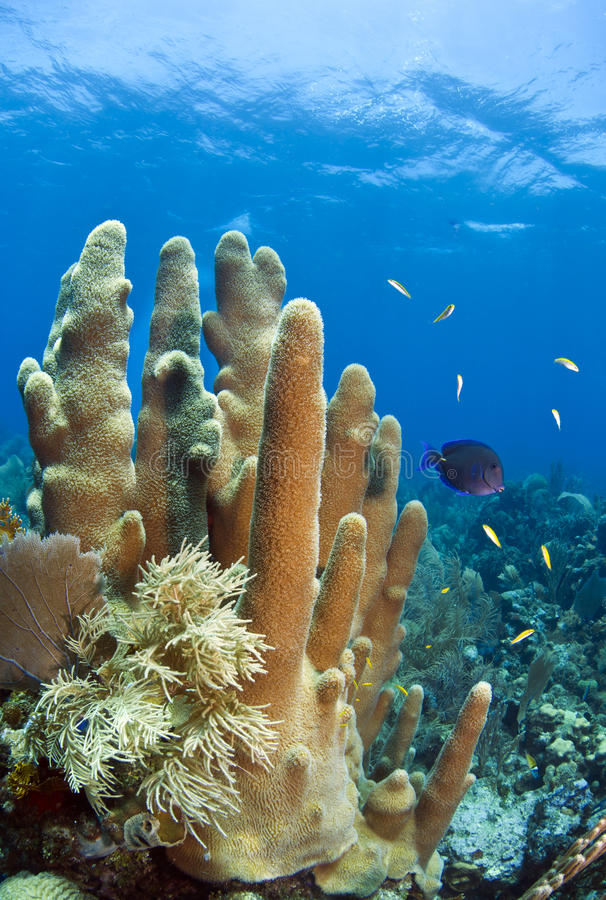 карибский коралловый риф стоковое фото rf