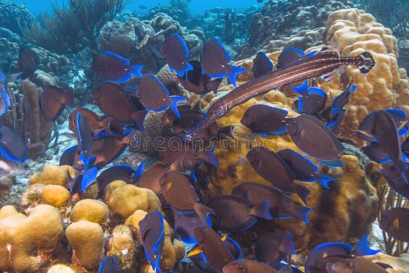 карибский коралловый риф стоковые фото