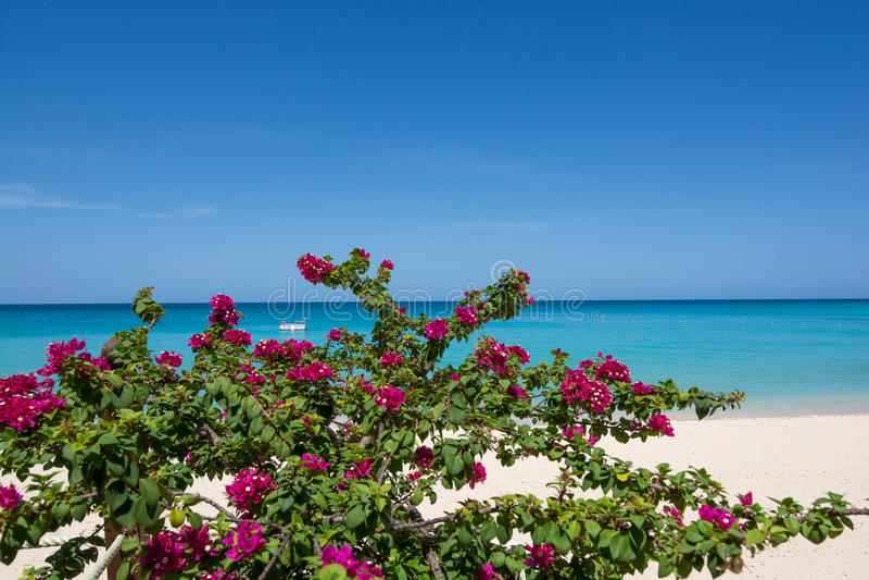 Карибский пляж Барбадос стоковые изображения