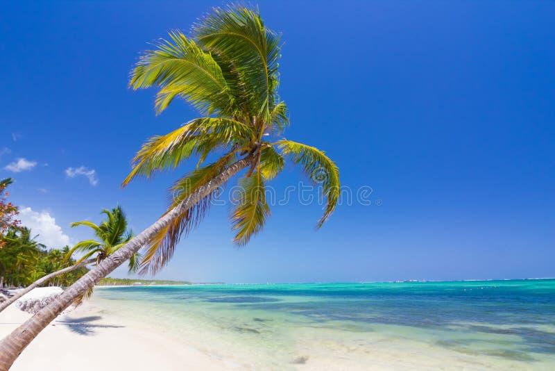Карибский пляж в Punta Cana стоковая фотография rf