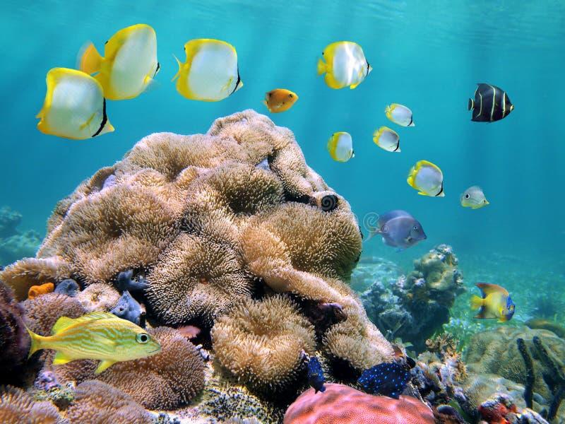 карибское цветастое море стоковое фото