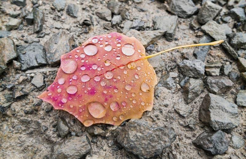 Карие лист во время дождя в цветах осени стоковое изображение rf