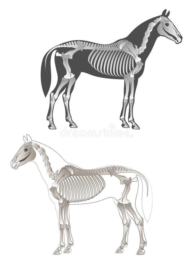 Каркасная лошадь иллюстрация штока