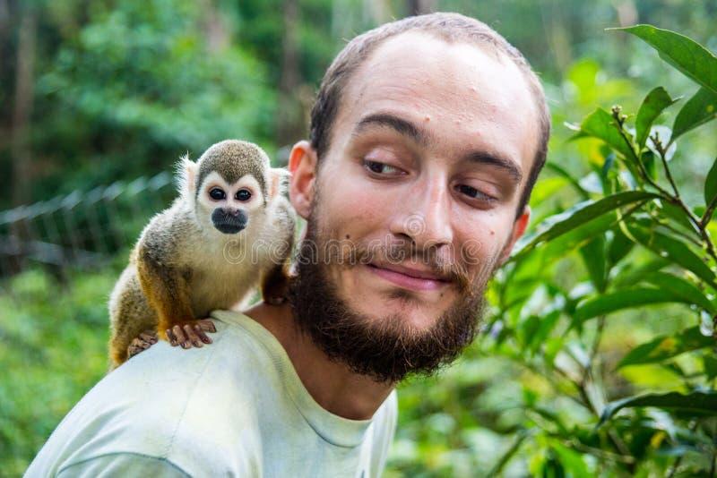 Карманная обезьяна пальца обезьяны aka подпрыгивает на задней части ` s человека стоковые фотографии rf