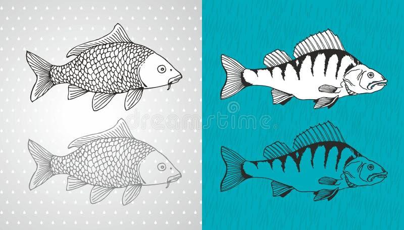 Карп и рыбы вектора окуня иллюстрация штока