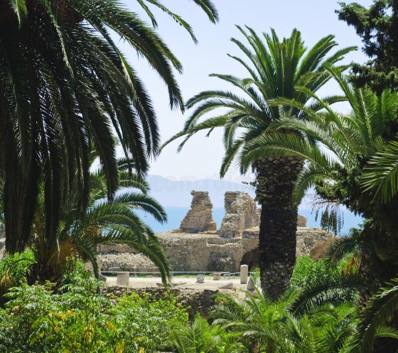 Картаго Тунис стоковые фото