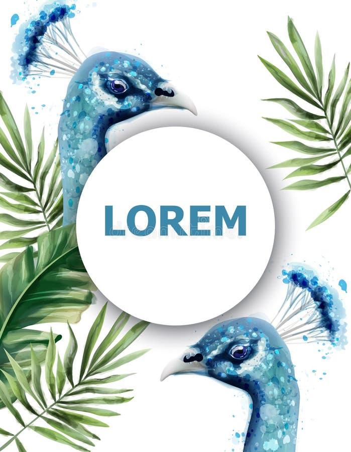 Карта вектора акварели павлина Шаблоны лета голубых птиц троповые экзотические иллюстрация штока