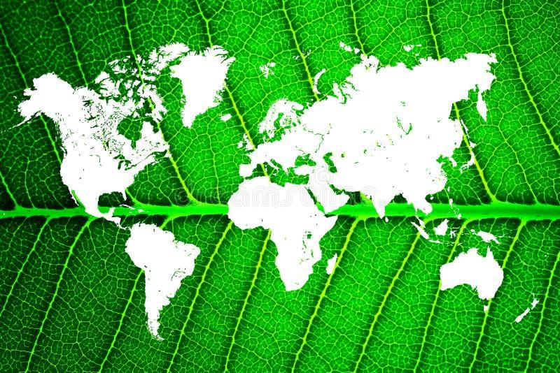 Карта мира в листьях стоковые фотографии rf