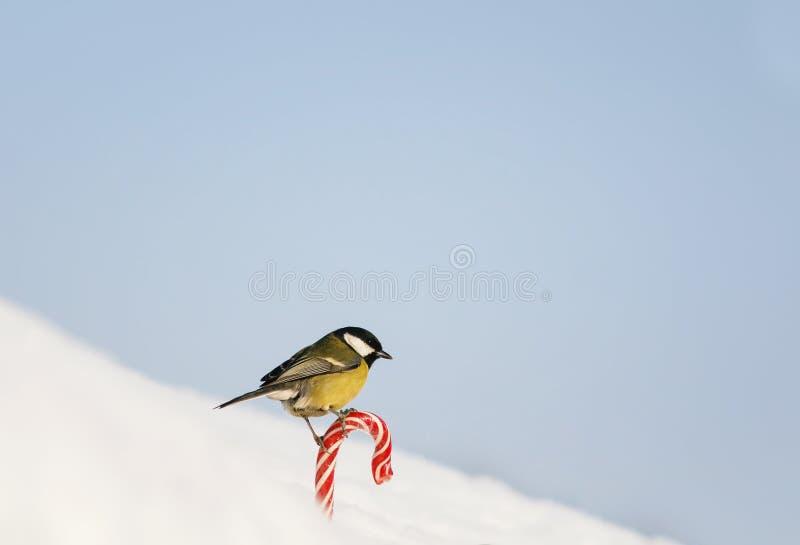 Карта праздника с птицей птицей держит сладкий красный сладкий белый снег на улице на предпосылке голубого неба стоковое фото rf