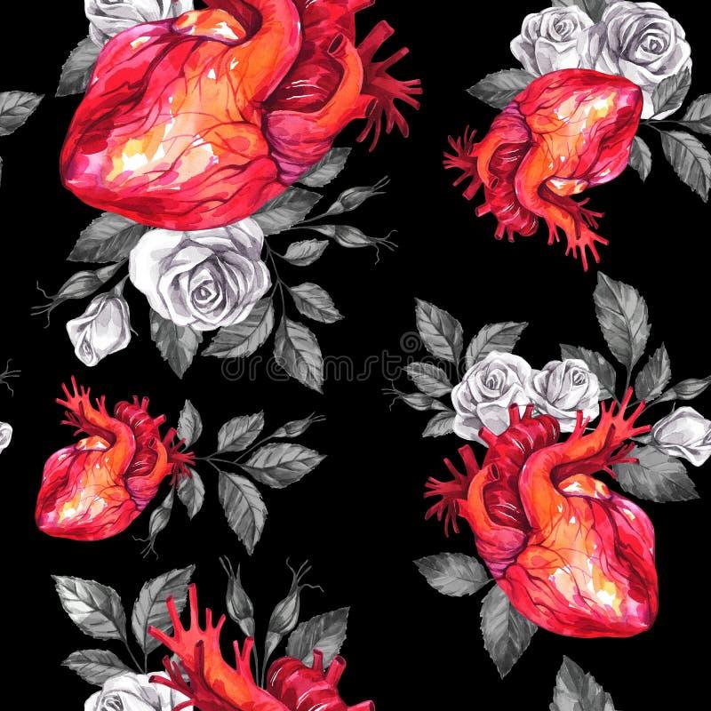 Картина акварели безшовная, анатомические сердца с эскизами роз и листья в винтажном средневековом стиле красный цвет поднял иллюстрация вектора