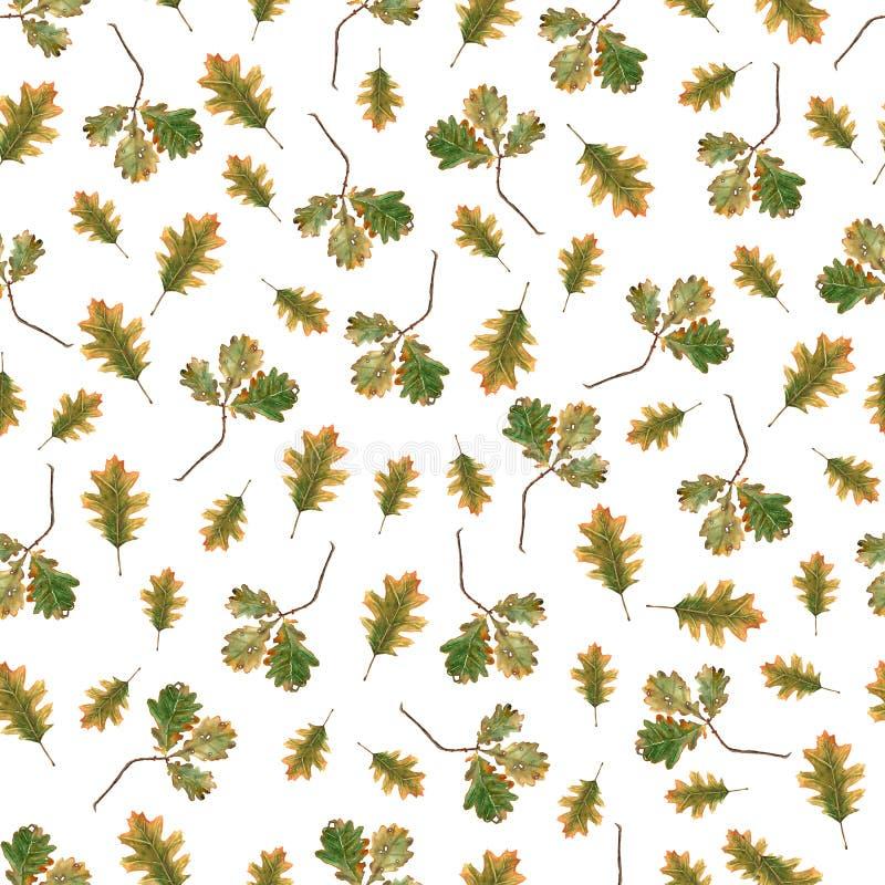 Картина акварели безшовная ветви и листьев дуба на белой предпосылке иллюстратор иллюстрации руки чертежа угля щетки нарисованный бесплатная иллюстрация