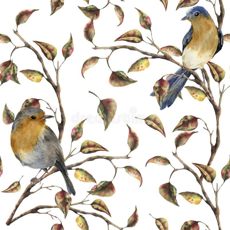 Картина акварели безшовная при робин сидя на ветви дерева Иллюстрация осени при изолированные птицы и листья падения иллюстрация вектора