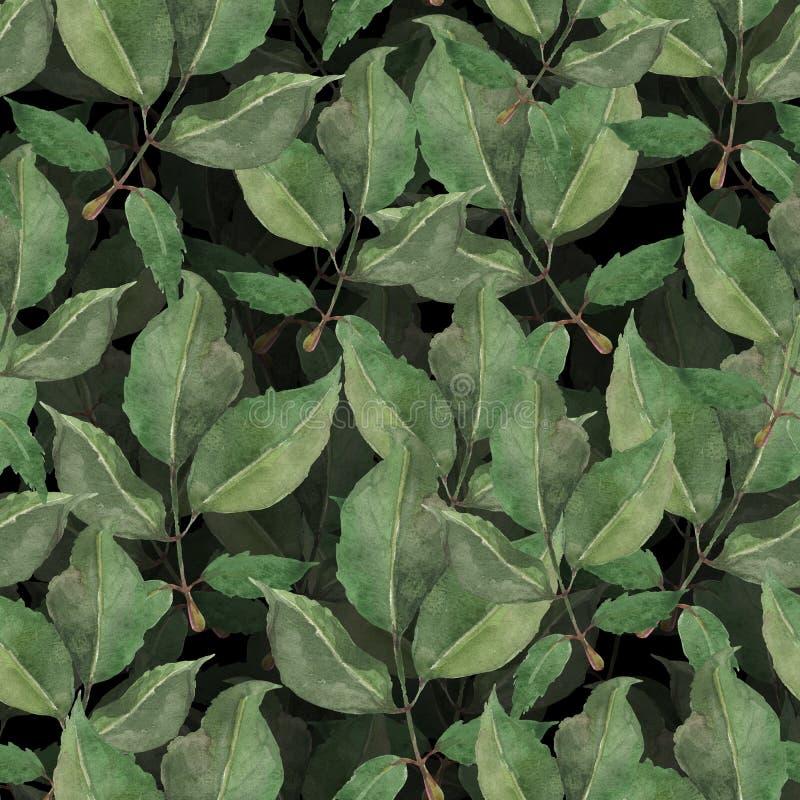 Картина акварели безшовная роз чая выходит на белую предпосылку стоковые изображения rf