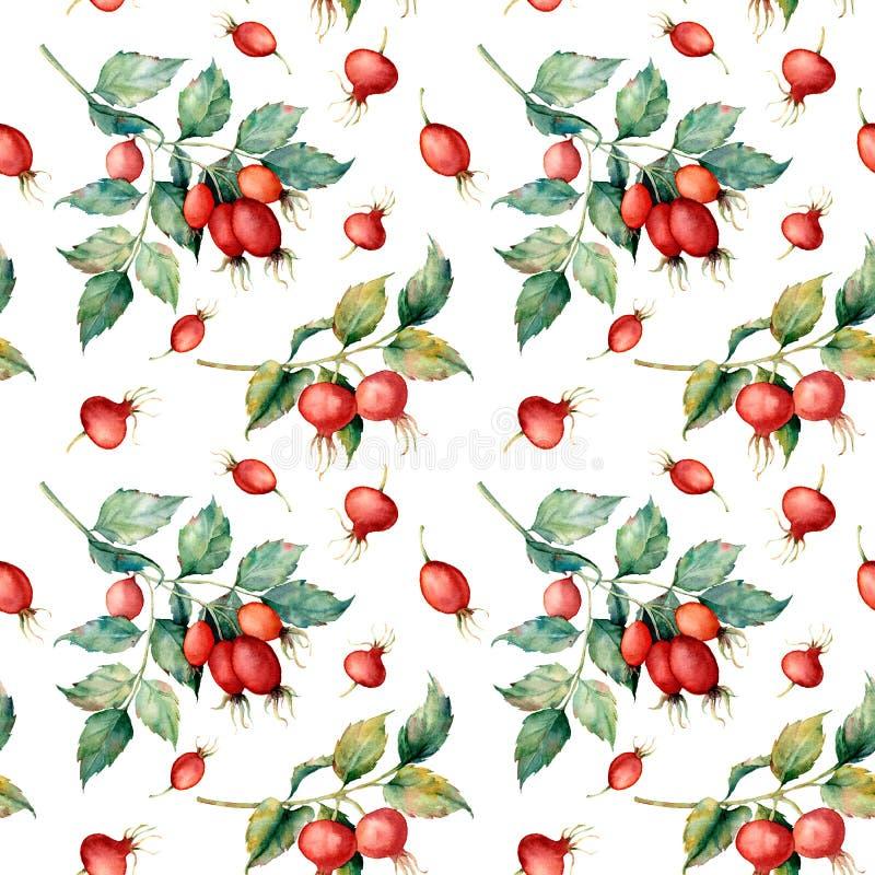 Картина акварели безшовная с ветвью briar, красных ягод и листьев зеленого цвета Собака покрашенная рукой розовая и изолированные бесплатная иллюстрация