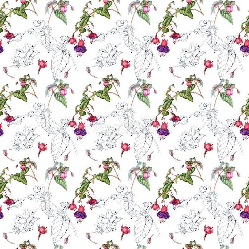 Картина акварели безшовная хворостин, цветков и плодов фуксии иллюстрация вектора