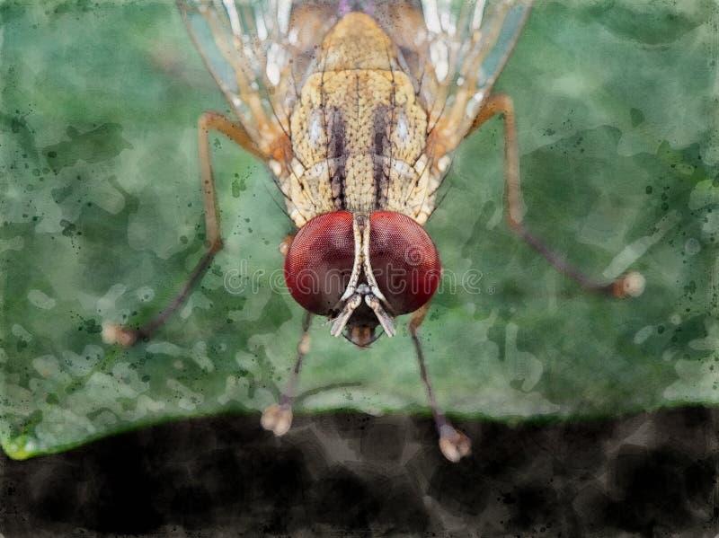 Картина акварели мухы комнатной на зеленых лист стоковые изображения