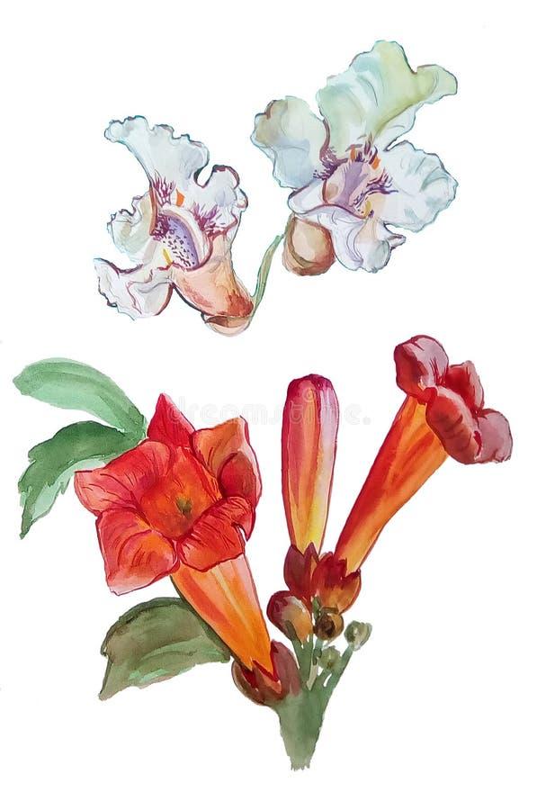 Картина акварели с красными и белыми цветками иллюстрация вектора