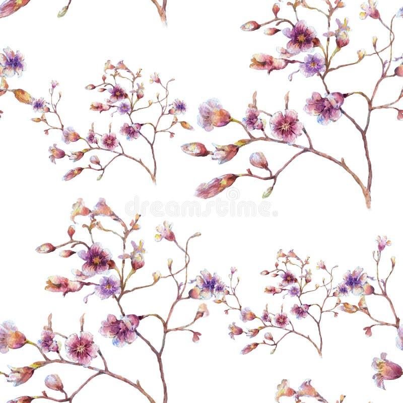 Картина акварели цветет, безшовная картина на белой предпосылке бесплатная иллюстрация