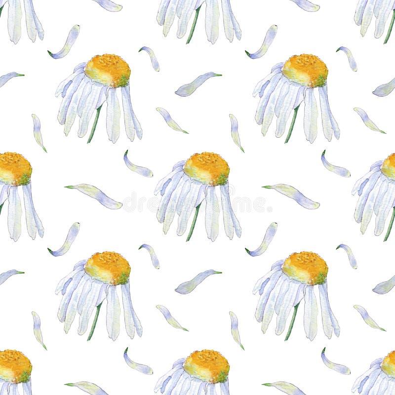 Картина акварели camomiles и лепестков иллюстрация вектора