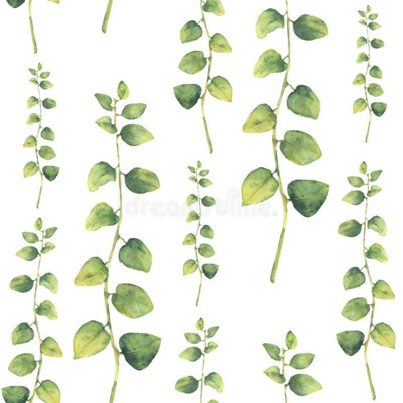Картина акварели зеленая флористическая безшовная с травами с круглыми листьями иллюстрация штока