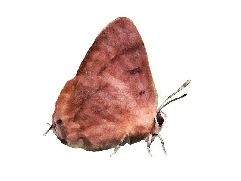 Картина бабочки стоковые изображения