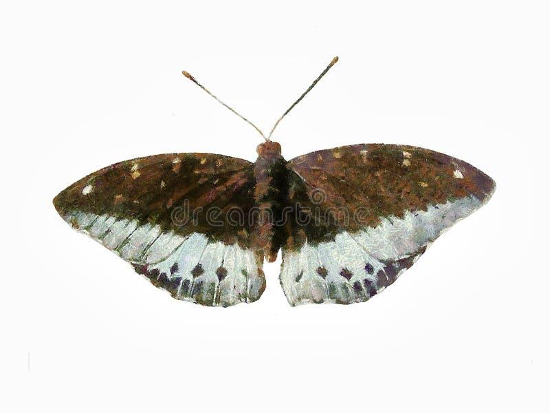 Картина бабочки стоковое фото