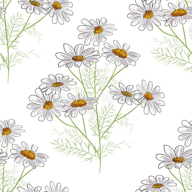 Картина вектора флористическая безшовная с травами лета желтыми и цветками стоцвета стоцвета r бесплатная иллюстрация