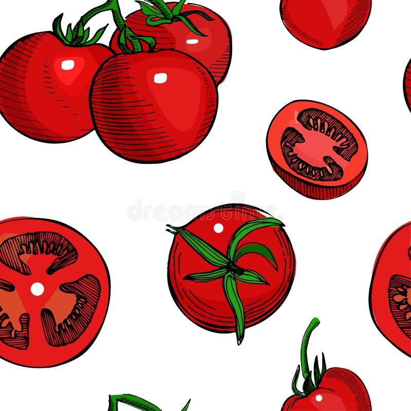 Картина вычерченного вектора руки томата безшовная Детальный ретро эскиз стиля Винтажный томат чернил, изолированный на белой пре иллюстрация вектора