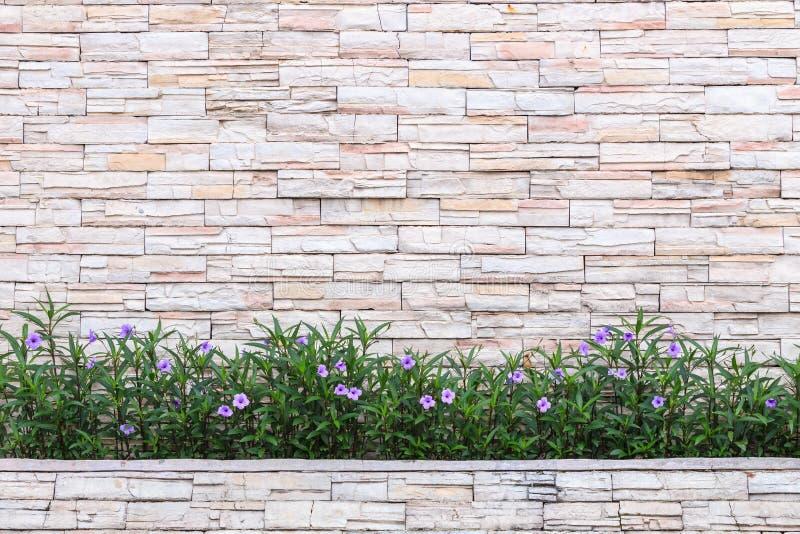 Картина естественного каменной завода стены и цветка Decorativ сада стоковое изображение