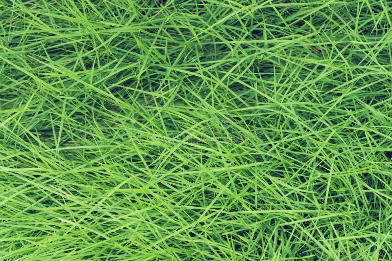 Картина зеленой травы, абстрактная предпосылка текстуры свежая природа стоковая фотография