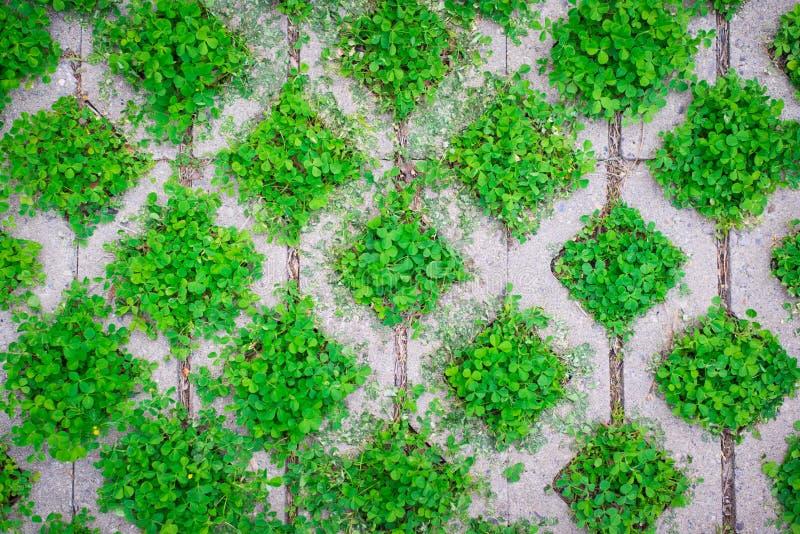 Download Картина, зеленые засорители заполняет кладя плитки пола Стоковое Изображение - изображение насчитывающей засорением, материал: 81804185