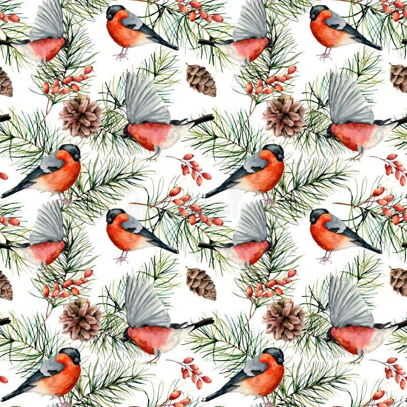 Картина зимы акварели с bullfinches Рука покрасила птиц, ветвей сосны с конусами, ягодами изолированными на белизне бесплатная иллюстрация