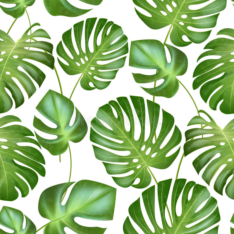 Картина листьев вектора безшовная тропическая сильные листья зеленых цветов экзотического завода monstera Ретро иллюстрация типа иллюстрация штока