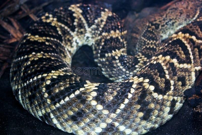 Картина кожи диаманта восточного rattlesnake задней части диаманта стоковое фото