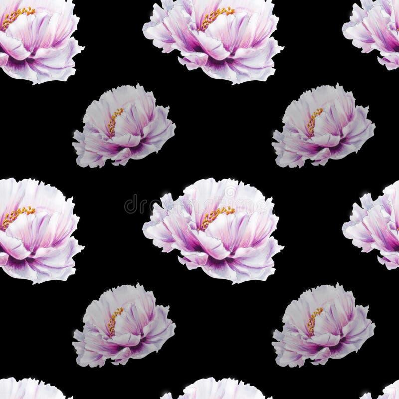Картина красивого белого пиона безшовная E Флористическая текстура Чертеж отметки иллюстрация штока