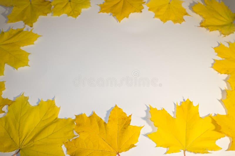 Картина красочных листьев осени, желтых листьев, белой предпосылки, лежа плоско, космос экземпляра стоковая фотография rf