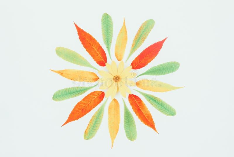 Картина красочных листьев осени и желтый артишок Иерусалима цветут в центре на белой предпосылке, взгляд сверху положения квартир стоковое фото rf