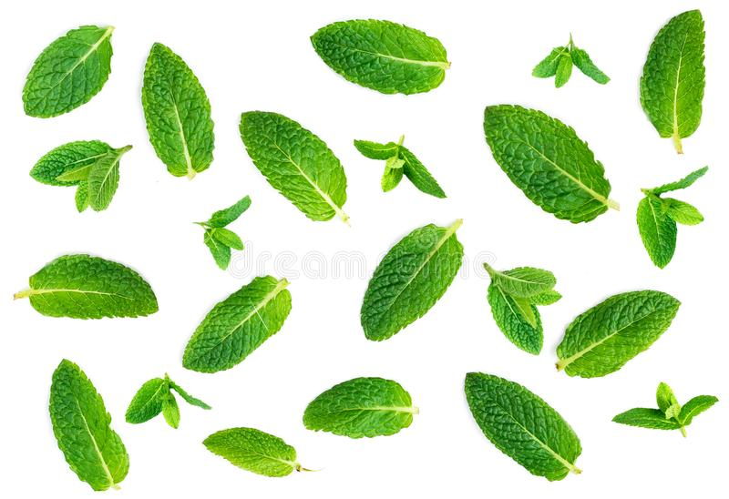 Картина листьев свежей мяты изолированная на белой предпосылке, взгляд сверху стоковые фотографии rf