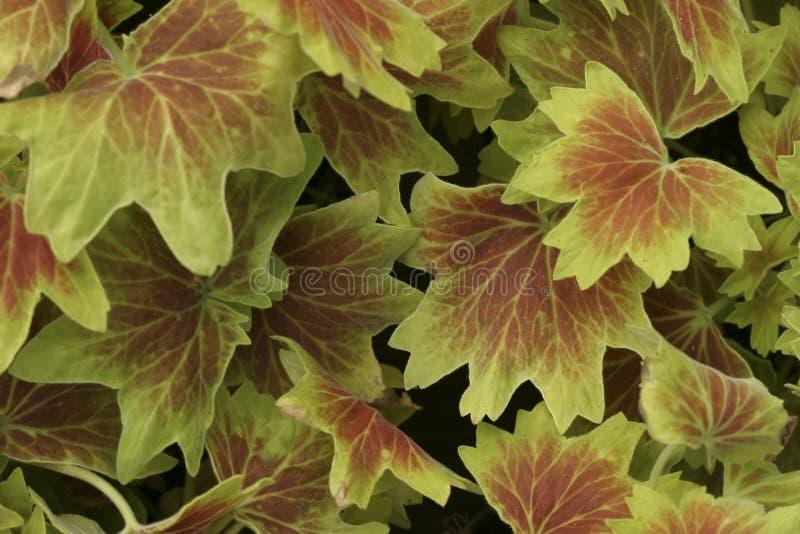Download картина листьев стоковое фото. изображение насчитывающей green - 476654
