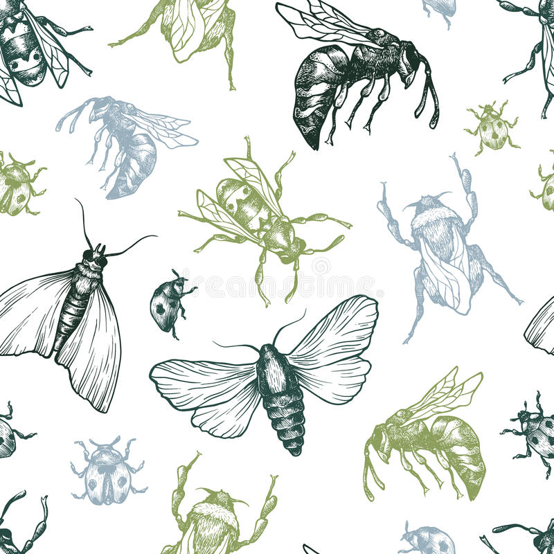 Картина насекомых иллюстрация вектора