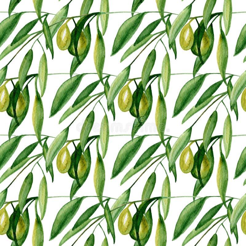 Картина оливковой ветки акварели безшовная на белой предпосылке стоковые фотографии rf