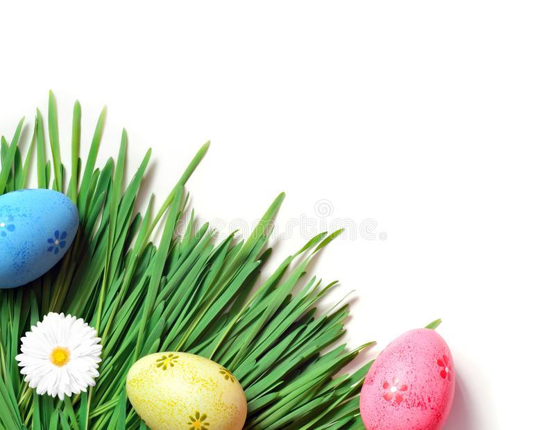 Картина пасхи eggs с маргариткой на свежей зеленой траве стоковая фотография
