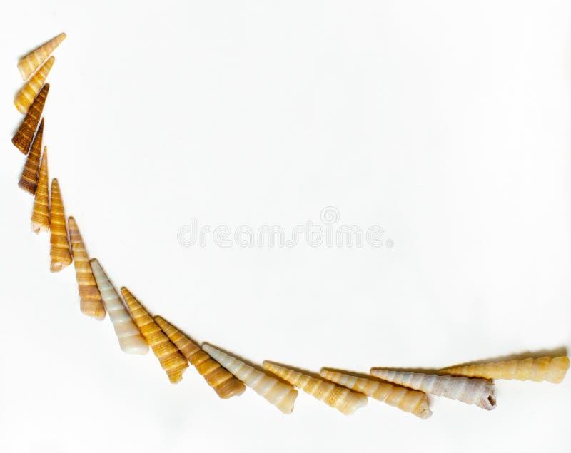 Картина раковины моря на полностью белой предпосылке стоковое изображение