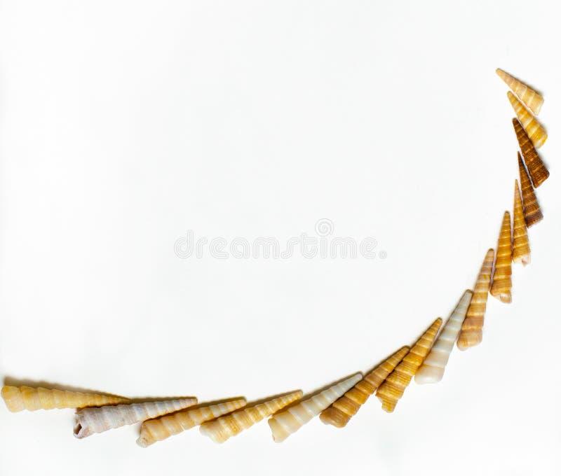 Картина раковины моря на полностью белой предпосылке стоковые фото