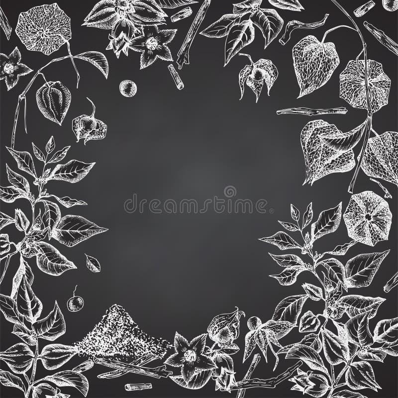 Картина рамки границы руки Ashwagandha вычерченная с ягодами, жизнями и ветвью в белом цвете мела на черной доске иллюстрация штока