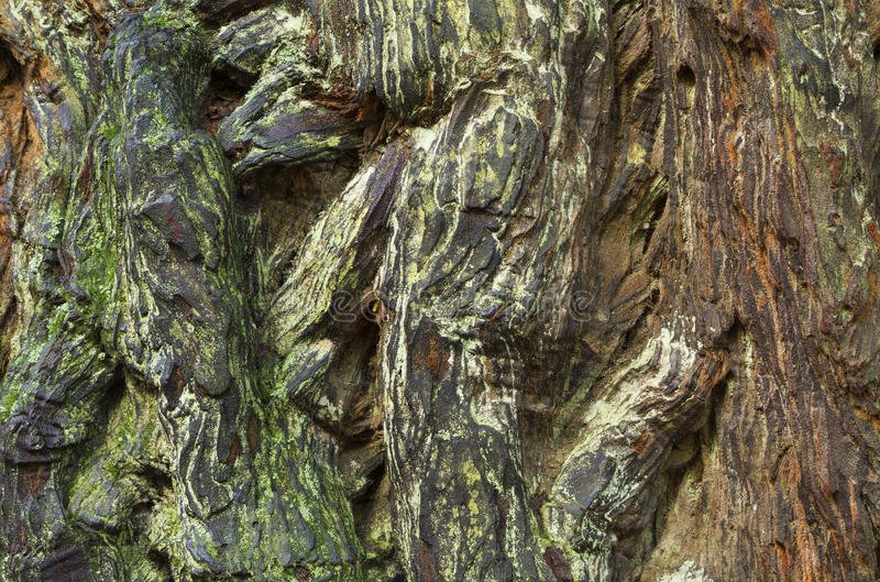 Картина расшивы Redwood стоковые изображения
