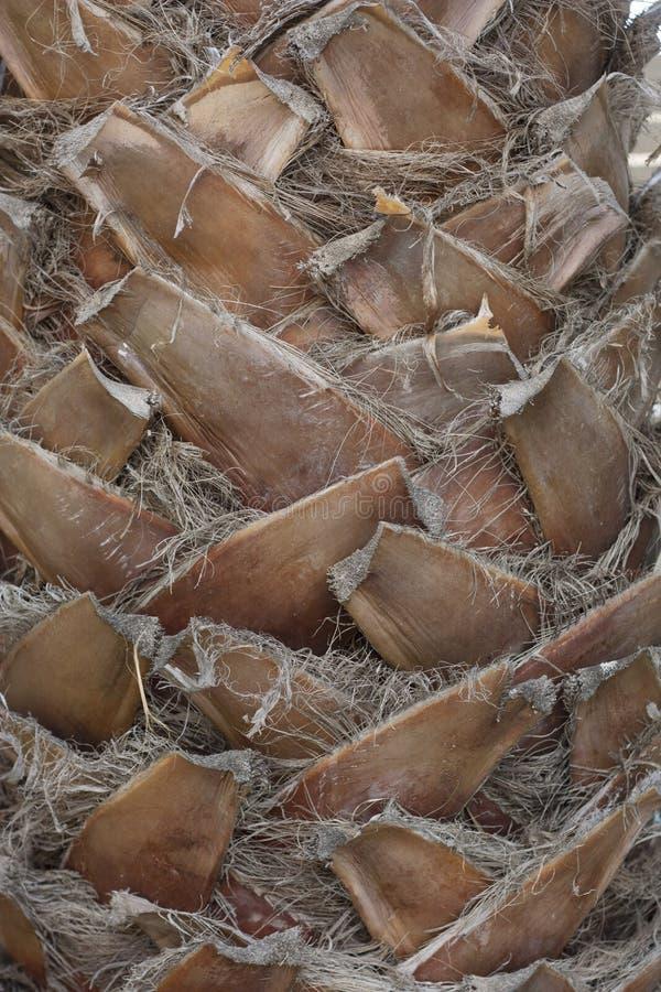 Картина текстуры предпосылки пальмы стоковое фото