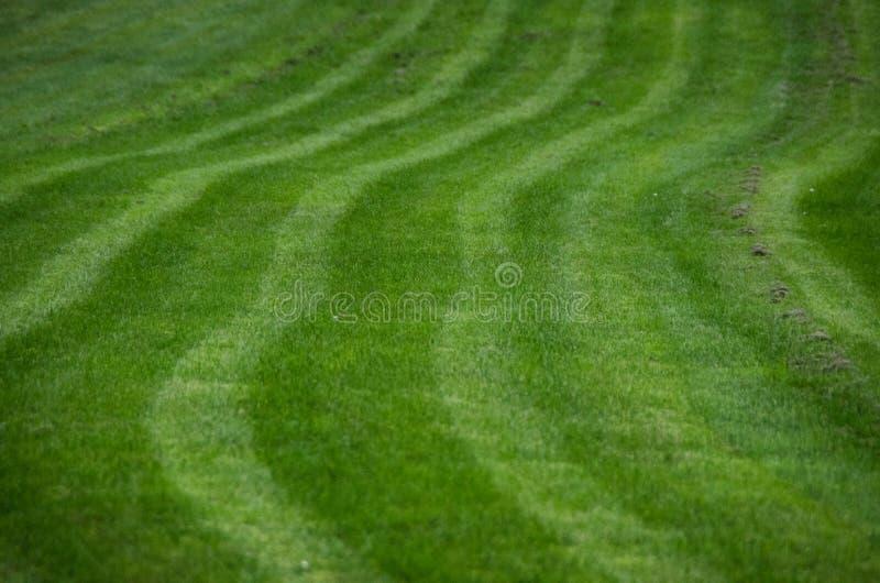 Картина травы стоковое изображение