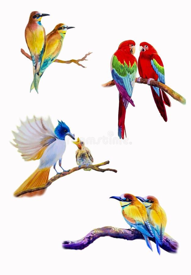 Картина установленной акварели птицы первоначально красочная птицы пар иллюстрация вектора